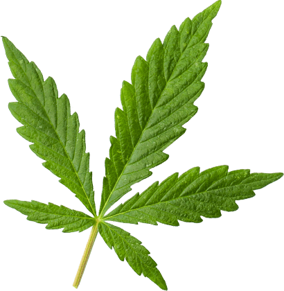 marijuana leaf extra large - Medical Marijuana Card Online Form